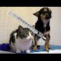 Zajistěte si včas - Hromadné očkování psů proti vzteklině