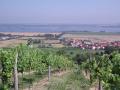 Vinn� sklep Mikulov, degustace v�na, lahvov� a sudov� v�no