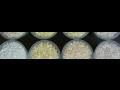 Koncentráty aditiv pro plasty, aditivní koncentráty – výzkum, vývoj, výroba