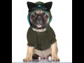 Módní oblečky pro psy - funkční, zimní oblečení, letní trička, šaty, mikiny