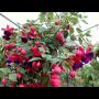 Zahradnictví Petro Mělník