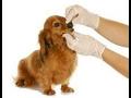 Stomatologické vyšetření u zvířat, preventivní čištění zubů u koček a psů