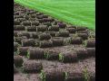 Travní koberce, pěstování, kultivace, prodej, pokládka, Lysá nad Labem