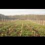 projekty, realizace výsadby krajinné zeleně