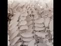 Palivové dříví, prodej, doprava a složení dřeva, okres Břeclav