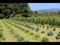 Výsadba a údržba keřů a okrasných stromů - sadové úpravy, výsadby vzrostlých stromů