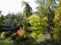 Výsadba okrasných stromů, Frýdek - Místek, Třinec