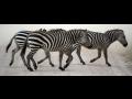 Zebra s.r.o. Velim – výroba samolepících etiket