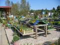 Prodej jehličnanů, ovocných listnatých stromů, okrasné rostliny.