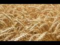 Přípravky pro zemědělství, regulátory růstu, listová hnojiva, technické přípravky