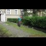 Stříhání živých plotů - údržba keřů a tújí