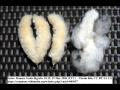 Rostlinné hedvábí Kapok - do zdravotních polštářů a přikrývek, vhodné ...