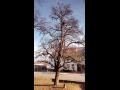 ořez stromů za využití stromolezecké techniky