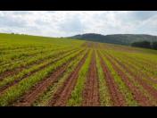 Výhodný prodej rostlinné výroby pro drobné odběratele
