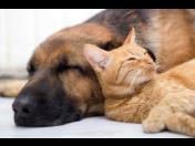 Kastrace sterilizace psů koček odstranění zubního kamene Jablonec