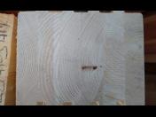 Sušené konstrukční hranoly KVH, DUO a BSH Náchod - Pro výrobu trámových konstrukcí