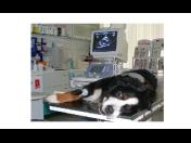 Veterinární kardiologie a vyšetření kardiologických potíží - neponechejte nic náhodě