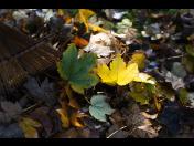 Hrabání listí včetně odvozu, příprava trávníku a celé zahrady na zimu
