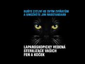 Laparoskopická kastrace – bezbolestné nadstandardní veterinární služby