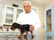 Povinné čipování psů Jablonec nad Nisou - nelze naočkovat proti vzteklině neočipovaného psa!