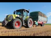 Prodej obilí Hradec Králové - pro výkrm skotu, produkce osiv