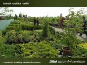Plotové túje z vlastní produkce Liberec - chrání před hlukem a zajistí soukromí