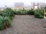 Velkoobchodní prodej živých vánočních stromků pro obchodní řetězce přímo z plantáže