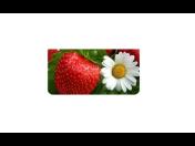 Prodej vřesů,  ovocných stromků, jahod, růží, zahradnictví Brno