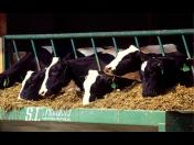 Výroba a prodej krmiv pro zvířata, kafilérie, zpracování živočišného odpadu, asanace