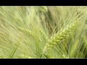 Rostlinná výroba se zaměřením na pěstování tržních plodin Pardubice