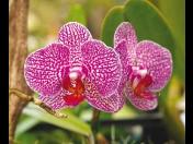 Prodej pokojových rostlin - květiny určené do bytu i kanceláře ze zahradnictví