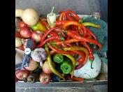 Domácí nakládaná zelenina z vlastnoručně vypěstované úrody