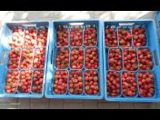 Přijďte si od června nasbírat čerstvé jahody a zakoupit domácí marmelády a zavařeniny