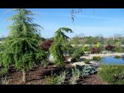 Kompletní realizace zahrad od vypracování návrhu až po vlastní realizaci