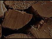 Péče o les, zalesnění, těžba a školkařství v lesích Mladé Boleslavi