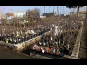 Prodej ovocných stromů a dřevin na zahradu - angrešt, rybíz, maliny a jabloně