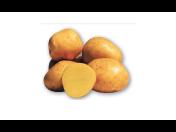 Kvalitní sadbové a konzumní brambory českého původu - rozvoz, pro uskladnění