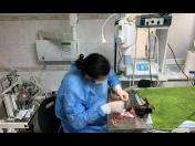 Profesionální péče o malá zvířata – neurologie a ortopedie psů, koček, morčat, králíků atd.