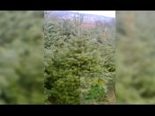 Klest na věnce a zdobení na Dušičky a Vánoce