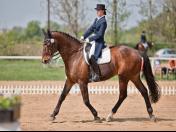 Prodej a chov sportovních a kladrubských koní Nebanice