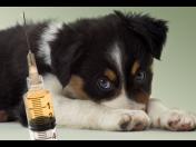 Očkování vakcinace ošetření odčervení psů koček domácích zvířat Liberec Jablonec.
