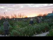 Zahradnictví, prodej květin-pokojové, řezané, balkónové rostliny