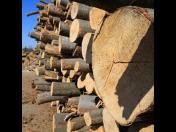 Prodej palivového dřeva - velkoobchod dřeva, dub, akát, buk