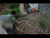 Okrasné výsadby zahrad - sadové a parkové úpravy