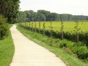 Odborné zhodnocení, posudky ke kácení dřevin, návrh na kompenzaci výsadby stromů