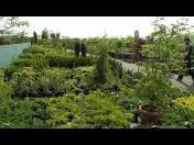 Zahradní centrum, okrasné dřeviny, hnojiva, Turnov