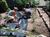 Návrhy zahrad i jejich realizace pro Kolín i okolí