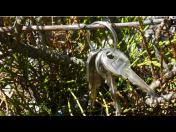 Zámečnictví - výroba náhradních klíčů, nouzové otevírání dveří, trezorů a automobilů