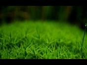 Podnikový ekolog, outsourcing životního prostředí, ŽP - odborná konzultace