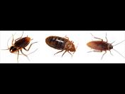 Dezinsekce - hubení švábů, cvrčků, rusů, štěnic, roztočů, mravenců